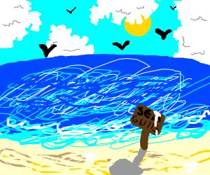 seagull territory
