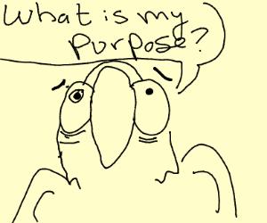 parrot having existential crisis