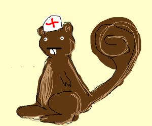 Squirrel Nurse