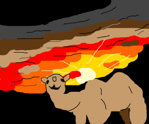 A camel walking in the desert,reddish sunrise