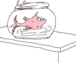 Dr. Suess fish