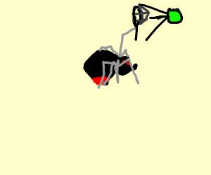 black widow(spider) plays tennis
