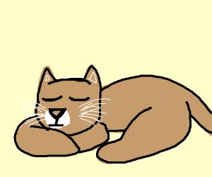 Calm Cougar