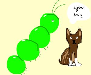 Caterpillar as big as a dog