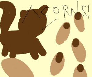 pet squirrel finds acorns