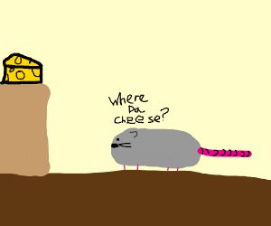 A mouse is looking for cheese