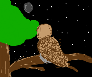 owl sitting on a tree watching the moon