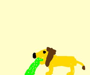 Puking lion