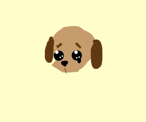 crying puppy