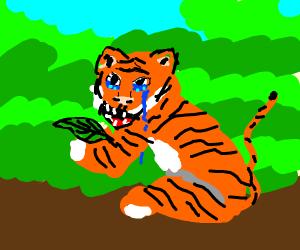 sad tiger eating a leaf