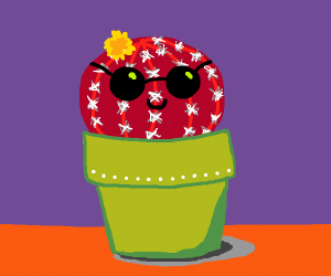 red cactus with sunglasses