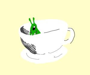 Grasshopper in a Teacup