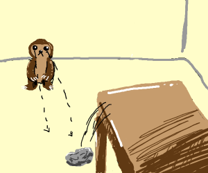 Sloth watches something fall from table