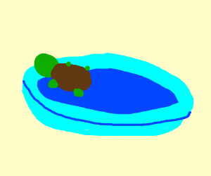 A turtle in a kiddy pool