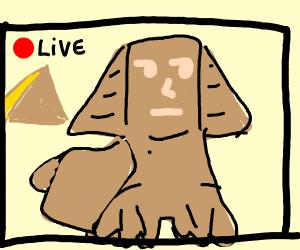 Sphynx Livestreamer