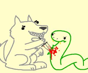 Wolf stabs a snake. Snake mildly displeased