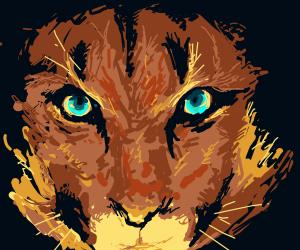Cougar's eye