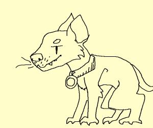 Pet Tasmanian Devil