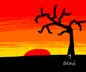 sunset with a dead tree