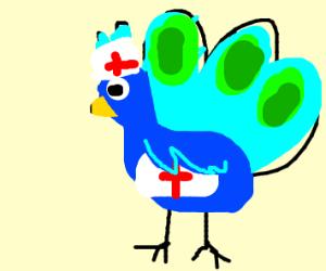 Peacock Nurse