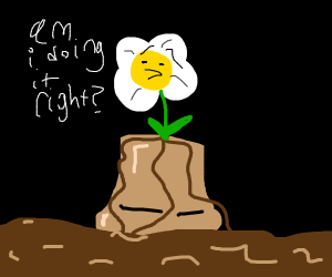 Flower on a pot