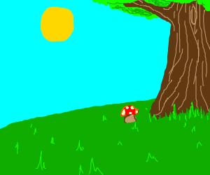 a beutiful mushroom next to a tree (day)