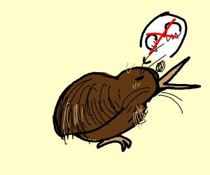 Kiwi (bird) refuses to fly.