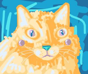 Pickachu cat