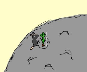 Rat planting the Moon