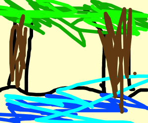 a lake in a forest
