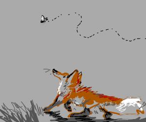 fox chasing fly