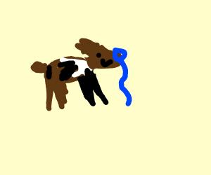 dog ties leash into noose, is happy.