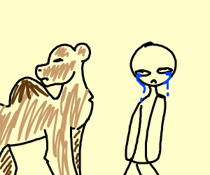 Camel Rejects Man
