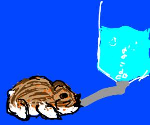 hamster drinks from a water bottle
