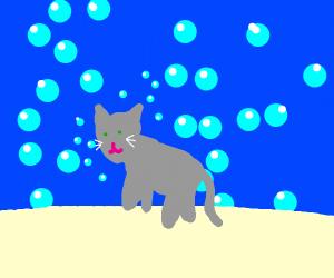 Bubbly kitty
