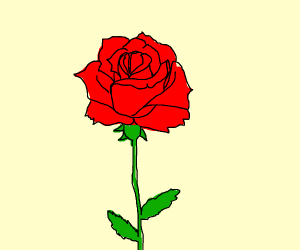 red rose with 2 leaves