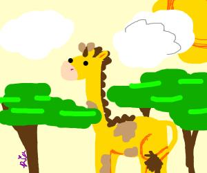 a giraf in a tree top