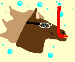 """A literal """"seahorse"""""""