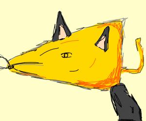 Cheese head cat