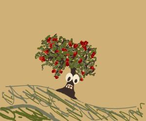 A shocked apple tree