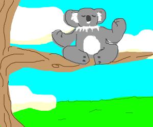 Koala meditates in a coconut tree