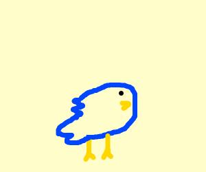 bird, thiccc