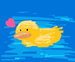 Duck be swimming