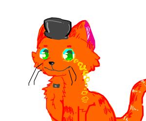 fancy orange cat