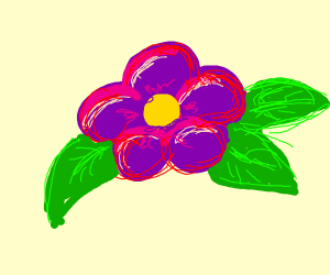 Red, pink and purple flower