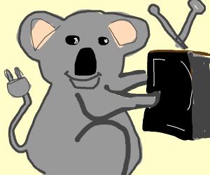 TV koala with plug for tail