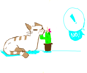 No cat! Don't eat the cactus!