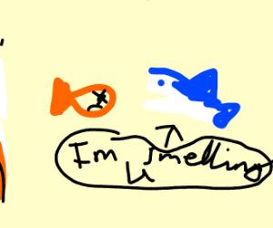 Shark smells dead fish