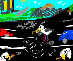 seagull smoking