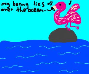 Flamingo dances and sings on rock